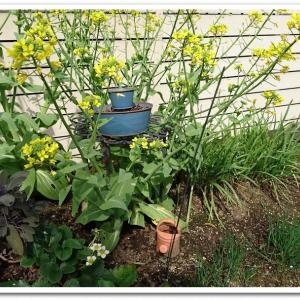 ◆春の訪れを待つ庭