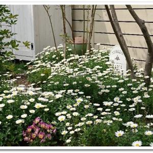 ◆春の花庭を散歩♪