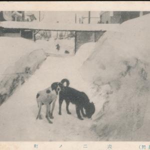 雪の長岡ワンコ(愛玩犬)