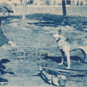 陸軍歩兵学校の守衛犬(軍犬)