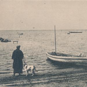 寒川海岸のワンコ(愛玩犬)