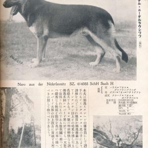 ネロ・アウス・デル・ニーデルラウシッツ SZ414088(俳優犬)