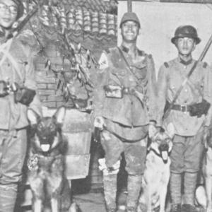 ヘクトル・フォム・リューアソウ KZ10917(俳優犬)
