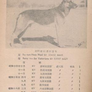 フリッツ・フォム・ハウスハクサン JSZ3534(在郷軍用犬)