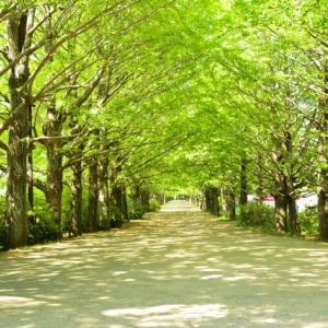 第18回 規則性Ⅱ─植木算(4年生)