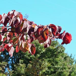 色づく樹々 4