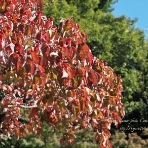 色づく樹々 5