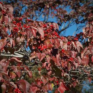 色づく樹々 6