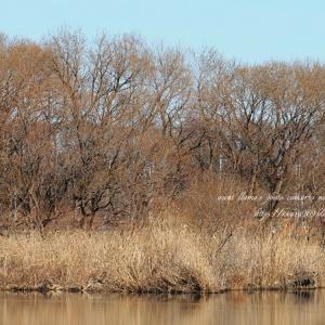 水辺の景色 2