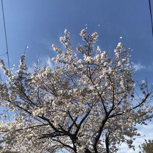 春ですね・・・٩(๑❛ᴗ❛๑)۶