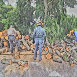 絶妙な梅雨の中の薪狩り