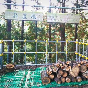新型コロナウィルスに感染した木の薪情報