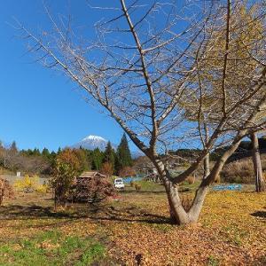 本日も秋晴れなれど、連日の薪狩りはこたえました