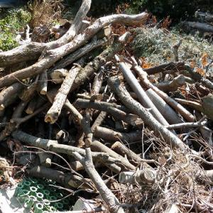 清水町へ薪情報の下見に行って来ました