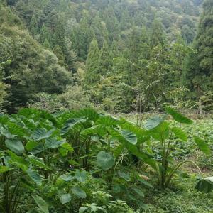 薬草が学べる公園:花背の森の薬草学