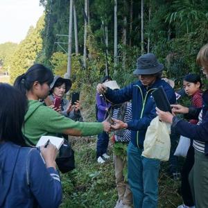 【11/3開催報告】植物に学ぶ山村集落に受け継がれる知恵:藍服と薬草狩り