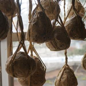 唐臼で搗く、麹を使わない天然発酵の「味噌玉」づくり