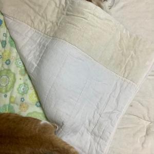 ねぼすけと早起き