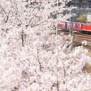今年から「桜とレッドサンダー」  EF510-1 #7