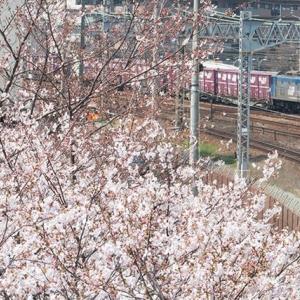 桃と桜(苦笑) EF210-162 #2