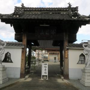 大城寺のケヤキ