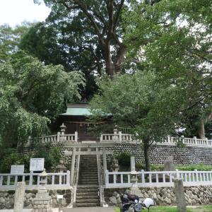 但沼神社のクスノキ