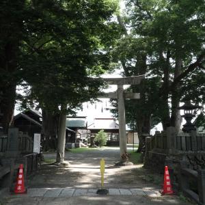 南宮神社のケヤキ