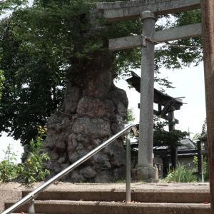 住吉神社のケヤキ