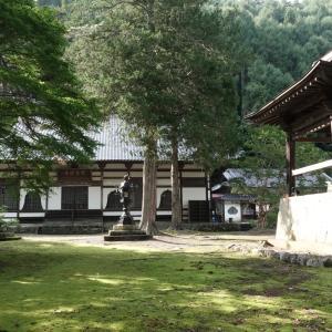 霊泉寺のケヤキ