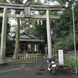 阿蘇神社のシイ