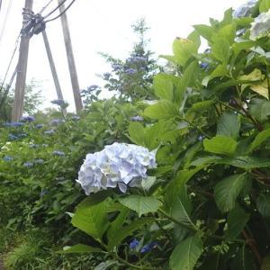 雨覚悟の箱根峠ラン