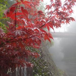 足柄峠は霧の中