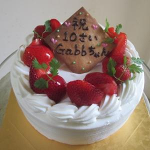 ガブちゃん、、、10歳 おめでとう!!!
