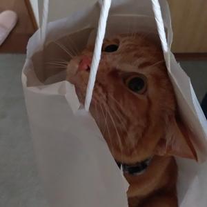 袋入り猫and出来上がったスヌード