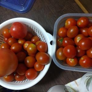 ミニトマトがあふれている