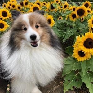 ポロたんと向日葵とほおずきとハートと…