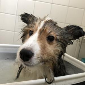 ポロたん衝撃(笑ゲキ?)の夏のお風呂写真