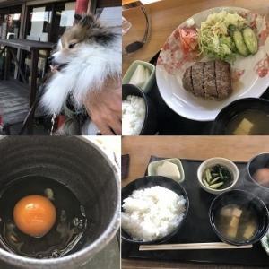 卵かけご飯と遠州一之宮・小國神社・最後の観光・旅12