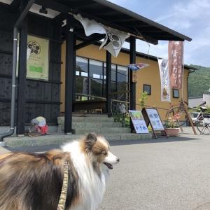 中伊豆のわんこカフェ