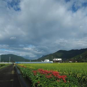 延岡ふるさと里山のチカラ再発見写真館NO 2010