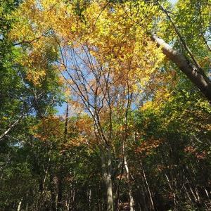 延岡ふるさと里山のチカラ再発見写真館NO 2090