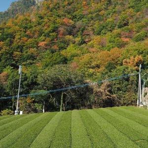 延岡ふるさと里山のチカラ再発見写真館NO 2093