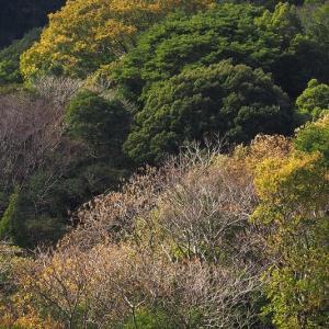 延岡ふるさと里山のチカラ再発見写真館NO 1121