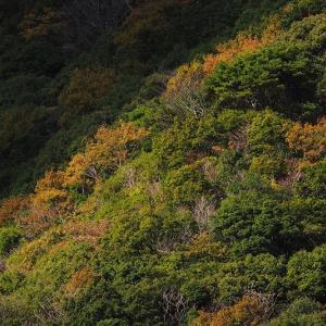 延岡ふるさと里山のチカラ再発見写真館NO 1122