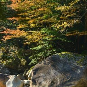 延岡ふるさと里山のチカラ再発見写真館NO 2320