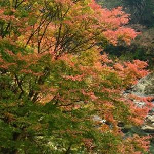 延岡ふるさと里山のチカラ再発見写真館NO 2330