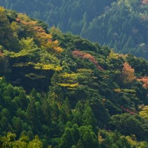 延岡ふるさと里山のチカラ再発見写真館NO 2331