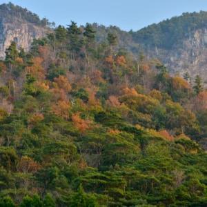 延岡ふるさと里山のチカラ再発見写真館NO 2332