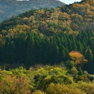 延岡ふるさと里山のチカラ再発見写真館NO 2340