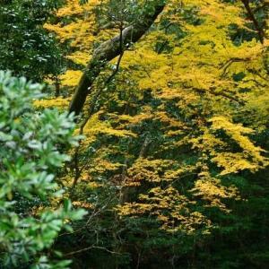 延岡ふるさと里山のチカラ再発見写真館NO 2343